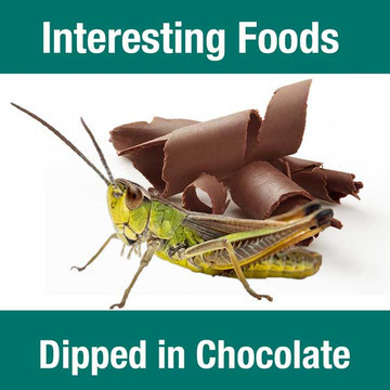 Interesting Foods Dipped in Chocolate